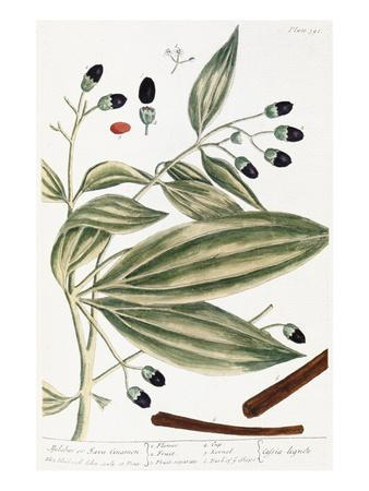https://imgc.artprintimages.com/img/print/malabar-cinnamon-1735_u-l-pff1gy0.jpg?p=0