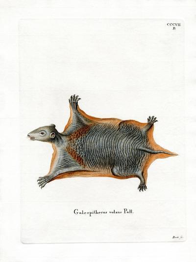 Malayan Flying Lemur--Giclee Print