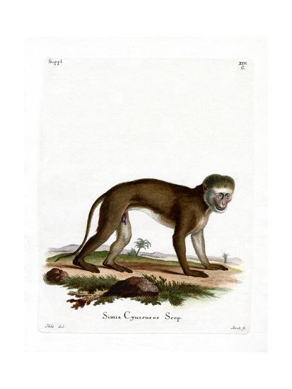 Malbrouck Monkey--Giclee Print
