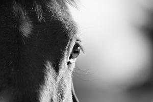 Horse in Black and White by Malcolm MacGregor