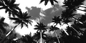 Aerial Palms by Malcolm Sanders