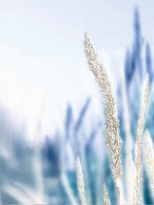 Blue Grass II by Malcolm Sanders