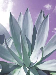 Cactus Delray by Malcolm Sanders
