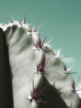 Cactus Pismo