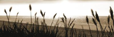 Coastal Tranquillity