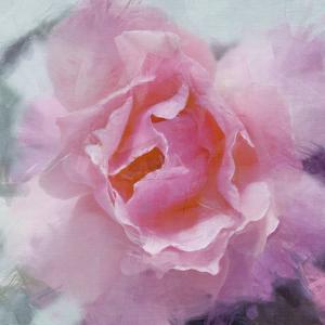 Elegant Bloom II by Malcolm Sanders