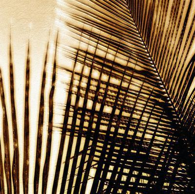 Light on Palms I