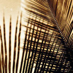 Light on Palms I by Malcolm Sanders