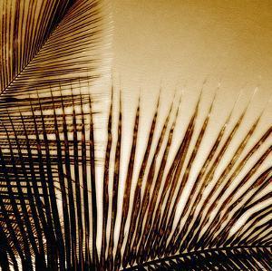 Light on Palms III by Malcolm Sanders