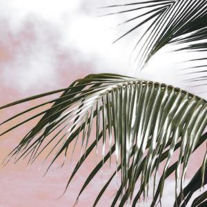 Palm Frond I by Malcolm Sanders