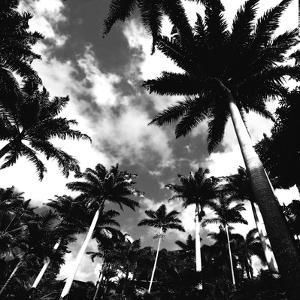 Towering Palms by Malcolm Sanders