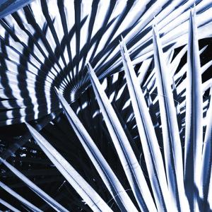 Tropica Asbury by Malcolm Sanders