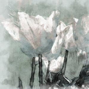 Tulip Breeze by Malcolm Sanders