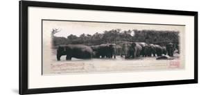 Elephant Journal by Malcom Sanders