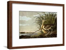 Male And Female Long Billed Curlew (Numenius Americanus) with the City of Charleston Behind-John James Audubon-Framed Giclee Print