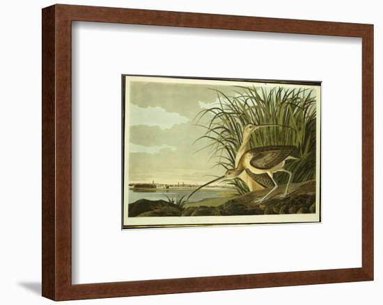Male and Female Long Billed Curlew-John James Audubon-Framed Premium Giclee Print
