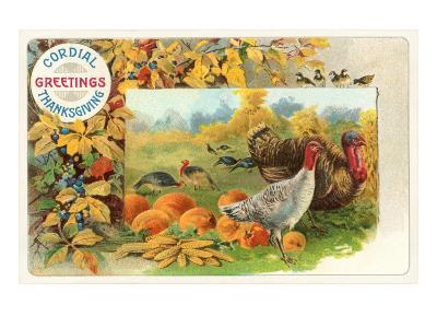 Male and Female Turkeys, Pumpkins--Art Print