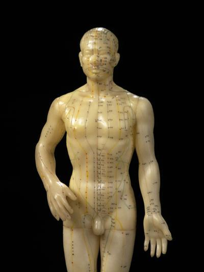 Male Dummy Showing Acupuncture Meridians & Points-Damien Lovegrove-Photographic Print