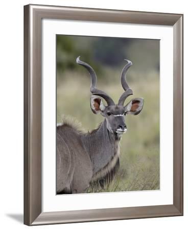 Male Greater Kudu (Tragelaphus Strepsiceros), Mountain Zebra National Park, South Africa, Africa-James Hager-Framed Photographic Print