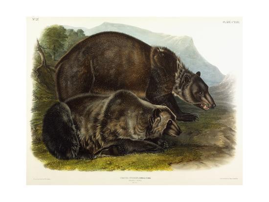 Male Grizzly Bear, 1848-John Woodhouse Audubon-Giclee Print