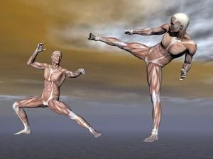 Male Musculature in Fighting Stance