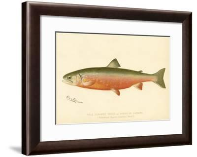 Male Sunapee Trout--Framed Giclee Print
