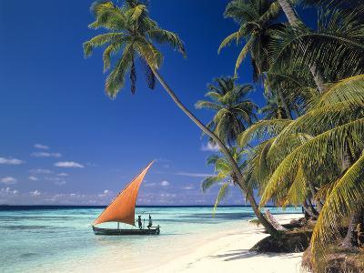 Malediven, Palmenstrand-Thonig-Photographic Print