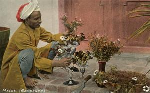 Malee, Gardener, North African with Bouquets