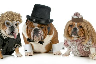 Males Bulldog With Two Females All Dressed In Formal Clothing Isolated On White Background-Willee Cole-Photographic Print