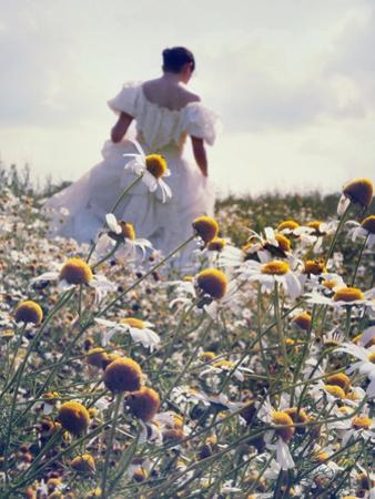 A Woman in a White Victorian Dress, Walking Among Camomile Flowers on a Meadow on a Sunny Day