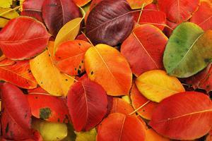 Autumn Background by Malija