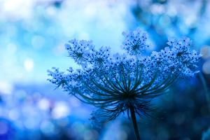 Wildflower Background by Malija