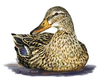 Mallard Duck-Tim Knepp-Giclee Print