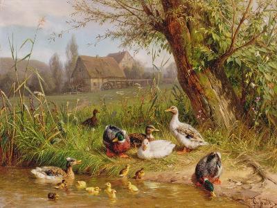 Mallard Ducks with their Ducklings-Carl Jutz-Giclee Print