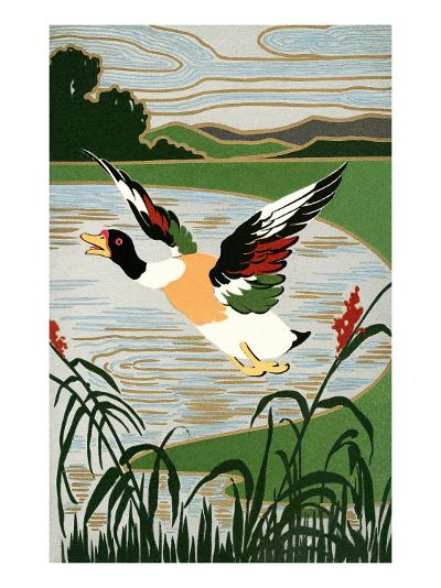 Mallard in Flight--Art Print