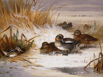 Mallard Widgeon and Snipe at the Edge of a Pool in Winter-Archibald Thorburn-Giclee Print