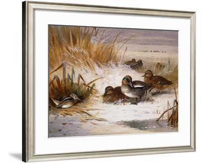 Mallard Widgeon and Snipe at the Edge of a Pool in Winter-Archibald Thorburn-Framed Giclee Print
