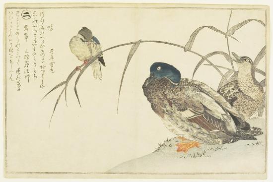 Mallards and a Kingfisher, 1790-Kitagawa Utamaro-Giclee Print