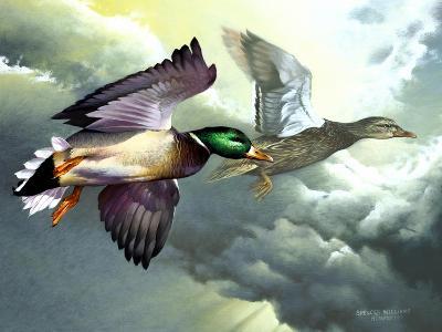 Mallards in Flight-Spencer Williams-Giclee Print