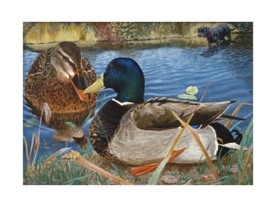 Mallards-Rusty Frentner-Giclee Print