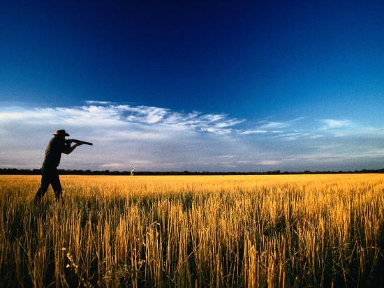 Mallee Farmer, Quail Shooting in Wheat Stubble - Mallee, Victoria, Australia-John Hay-Photographic Print