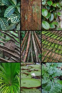 A poster featuring plants found in the Jungles of the Peruvian Rainforest by Mallorie Ostrowitz