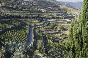 Douro Valley, Terraced Vineyards of Sandeman That Produces Port Wines by Mallorie Ostrowitz