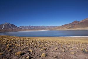 In the Altiplano of the Antofagasta Region of Chile, Is Miniques Lake by Mallorie Ostrowitz