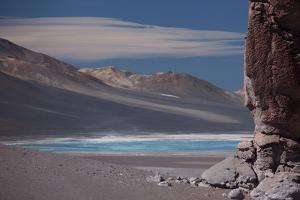 Llamas Grazing by the Tara Salt Lake, Atacama Desert, Bolivian Border by Mallorie Ostrowitz