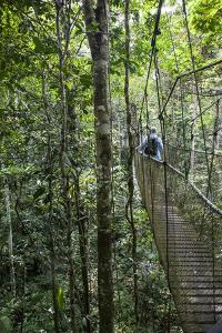 Suspension Bridge, Pacaya-Samiria Reserve, Amazon Rainforest. Peru by Mallorie Ostrowitz