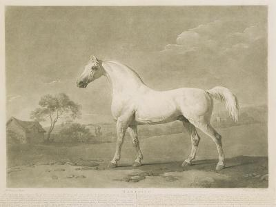 Mambrino, after George Stubbs, 1788-Charles Howard Hodges-Giclee Print