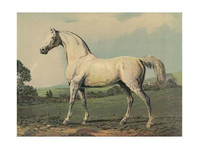 Mambrino (Racehorse)--Giclee Print