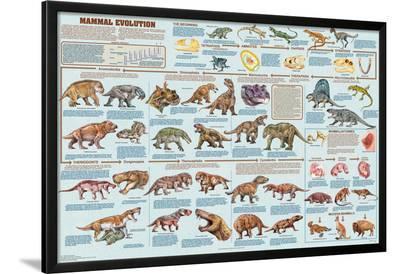 Mammal Evolution--Lamina Framed Poster