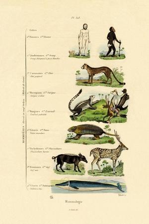 Mammalogy, 1833-39--Giclee Print